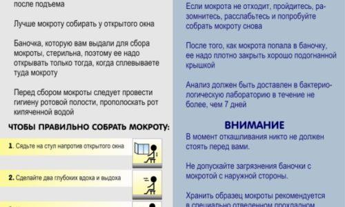 listovka_kak_pravilno_sobrat_mokrotu2