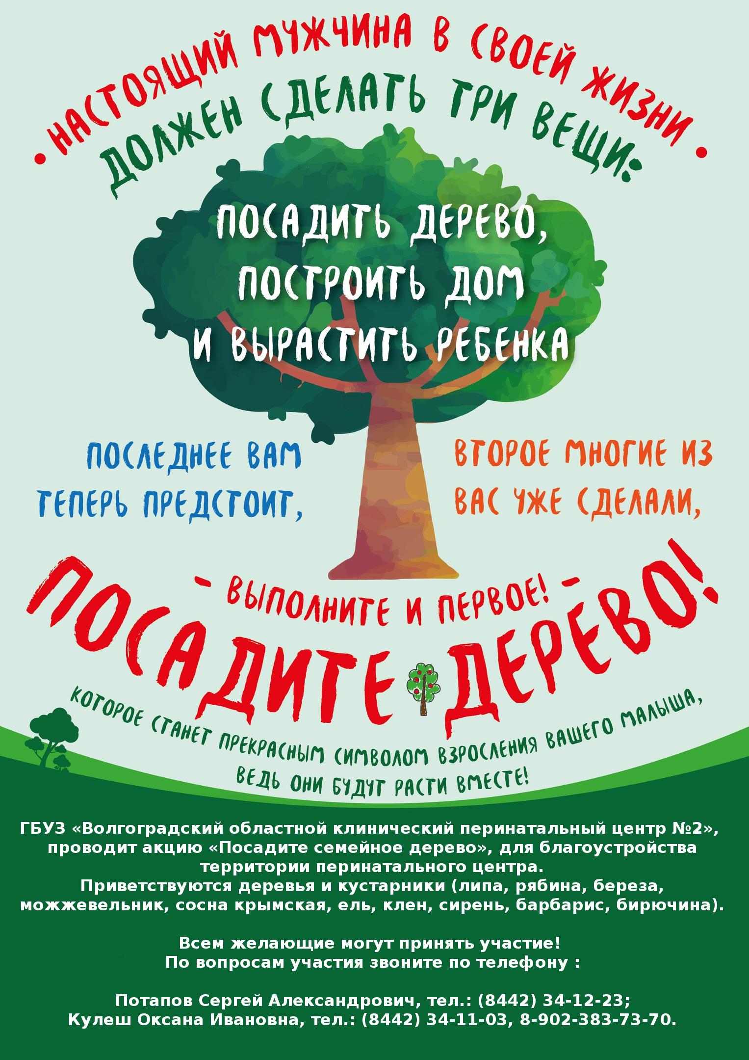 дерево__
